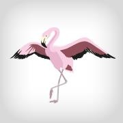 Logo Berlin Flamingos